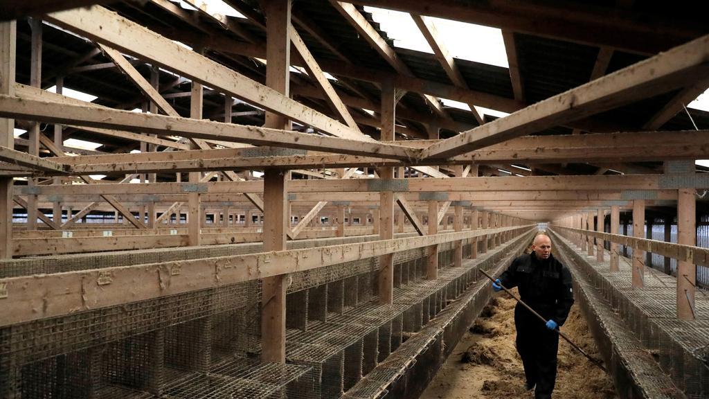 Mink farmer and fur trader Erik Vammen, 62, works in a shed that formerly housed mink at the Semper Avanti mink farm during the outbreak of the coronavirus disease (COVID-19) in Moldrup, Denmark