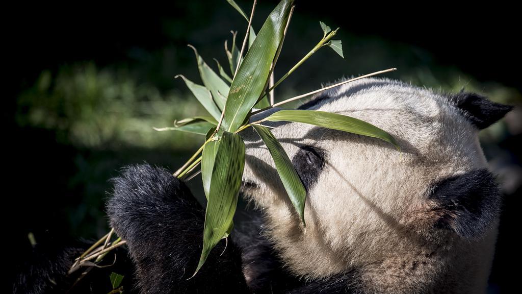 PLUS Danskerne gik panda-amok i påsken