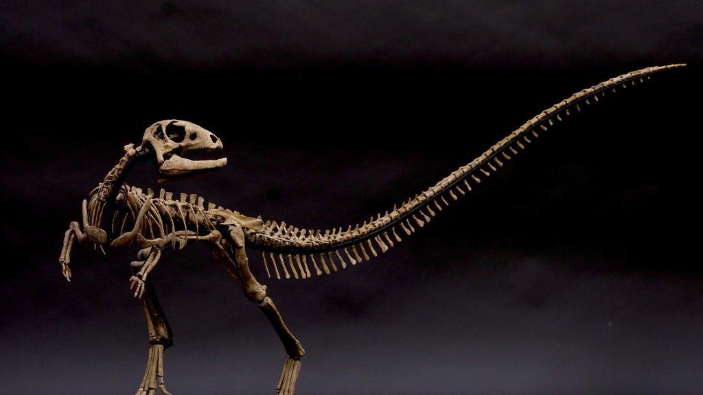 Zephyrosaurus_Dinosaurernes_konge_Statens_Naturhistoriske_Museum.jpg