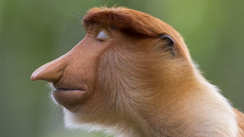 © Mogens Trolle, Wildlife Photographer of the Year 2020.jpg